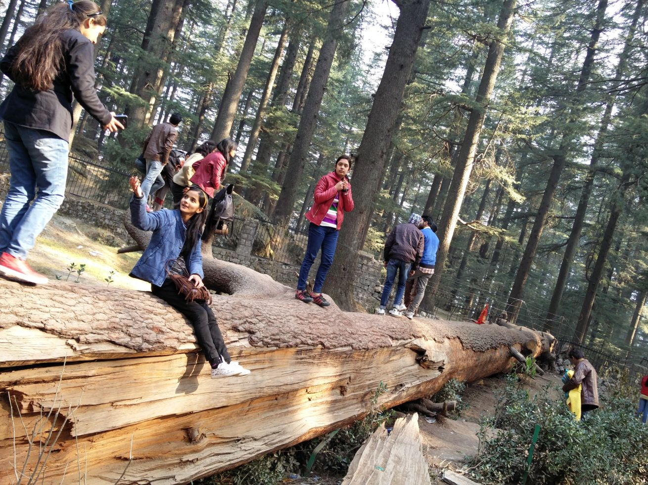 Tourists at Hadimba Temple, Manali